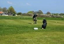 Golfens Dag I Aabenraa Golfklub 2014